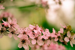 Beautiful pink. Pink flowering trees. Spring mood and wonderful nature Royalty Free Stock Images