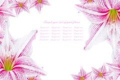 Beautiful pink flowers Stock Photography