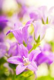 Beautiful pink flowers stock images