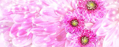 Beautiful pink flowers background Royalty Free Stock Images