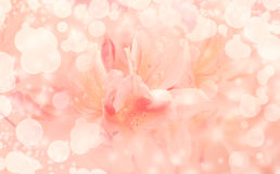 Beautiful pink flowers background Royalty Free Stock Photography