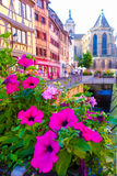 Beautiful pink flowers with colorful traditional building background. Beautiful pink flowers with traditional colorful half-timbered houses background in Colmar royalty free stock images