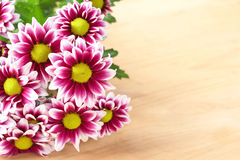 Beautiful pink flowers with copy space Stock Images