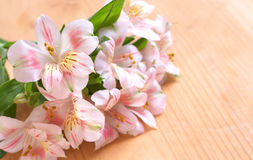 Beautiful pink flowers with copy space Royalty Free Stock Photography