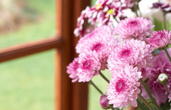 Beautiful pink flowers with copy space Royalty Free Stock Images