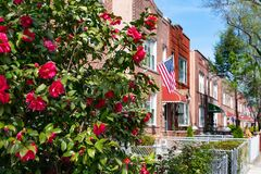 Free Beautiful Pink Flowers During Spring Along A Row Of Old Brick Homes With An American Flag In Astoria Queens New York Royalty Free Stock Image - 187687286