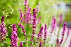 Beautiful pink flowers on field Royalty Free Stock Photo