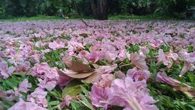 Beautiful pink flowers on The filed grass in park. Relax Stock Photography