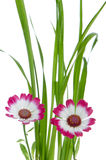 Beautiful pink flowers and green Stock Photo