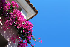 Beautiful pink flowers at the hotel balcony. Photo of beautiful pink flowers at the hotel balcony stock image