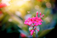 Beautiful pink flowers and insect in a garden. Stock Image