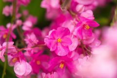 Beautiful pink flowers made with color filters. Flowers made with color filters stock photography