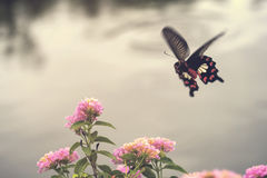 Beautiful pink flowers with motion of flying butterfly. Stock Photography
