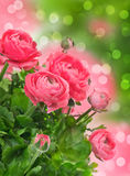 Beautiful pink flowers over blurred background Stock Photo