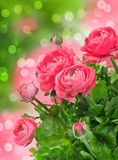 Beautiful pink flowers over blurred background Royalty Free Stock Images