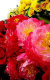 Beautiful pink flowers photo Stock Images