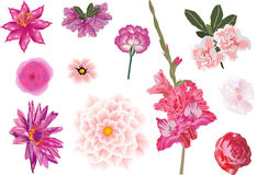 Beautiful pink flowers set Stock Photography