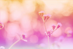 Beautiful pink flowers in Surat Thani Thailand Royalty Free Stock Images
