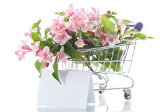 Beautiful pink flowers in the truck Royalty Free Stock Image
