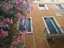 Beautiful pink flowers and beautiful windows. With nice green shutters stock photos