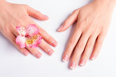 Beautiful pink freesia with franch manicure. Beautiful pink freesia with franch manicure on a white background royalty free stock photos