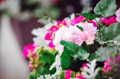 Beautiful pink geranium flowers. Decoration on the street royalty free stock photo