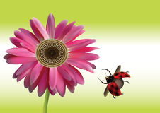 Beautiful pink Gerbera Daisy flower with ladybird Stock Photo