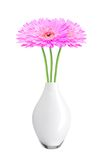 Beautiful pink gerbera daisy flowers in vase isolated Royalty Free Stock Images