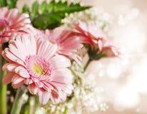 Beautiful pink gerbera flowers Stock Images