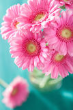 Beautiful pink gerbera flowers bouquet in vase Stock Images