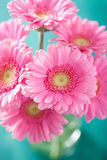 Beautiful pink gerbera flowers bouquet in vase Royalty Free Stock Photo