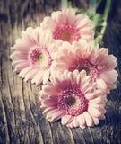 Beautiful pink gerbera flowers. Stock Images