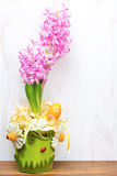 Beautiful pink hyacinth in flower pot Stock Images