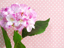 Beautiful pink hydrangea of artificial flowers bouquet on pink polka dot background Stock Photo