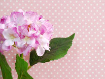 Beautiful pink hydrangea of artificial flowers bouquet Royalty Free Stock Image