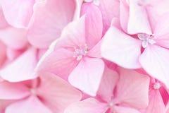 Beautiful pink hydrangea flowers background. Natural soft pattern, close up stock photo