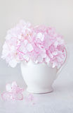 Beautiful pink hydrangea flowers. Stock Images