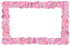 Beautiful Pink hydrangeas flower frame. Stock Images