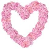 Beautiful Pink hydrangeas heart-shaped flower frame. Royalty Free Stock Photos