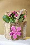 Beautiful pink kalanchoe flower with gift best wishes card Royalty Free Stock Images