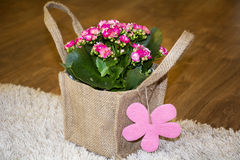 Beautiful pink kalanchoe flower with gift card packed in canavas bag Royalty Free Stock Photo