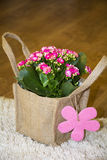 Beautiful pink kalanchoe flower with gift card packed in canavas bag Royalty Free Stock Photos