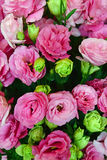 Beautiful Pink and Light Green Roses. Beautiful bouquet of Pink and Light Green Roses decorating the lobby of a luxury hotel stock photo