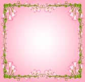 Beautiful pink lilies Royalty Free Stock Photography
