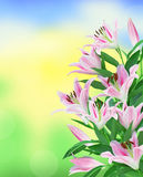 Beautiful pink lily over bright nature Royalty Free Stock Images