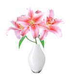 Beautiful pink lily in vase on white background. With clipping path Stock Images