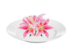 Beautiful pink lily on white plate isolated on white Stock Photos