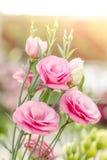 Beautiful pink lisianthus flower Royalty Free Stock Photos