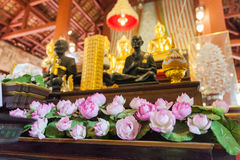 Beautiful pink lotus for give respect to buddha Royalty Free Stock Photos