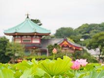 Beautiful pink lotus in Ueno park, Tokyo, Japan Stock Photo